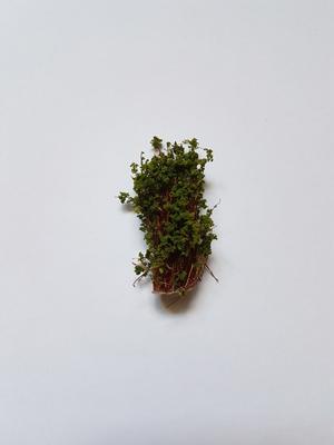 Buske 3cm Grön
