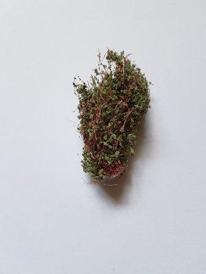 Buske 5cm